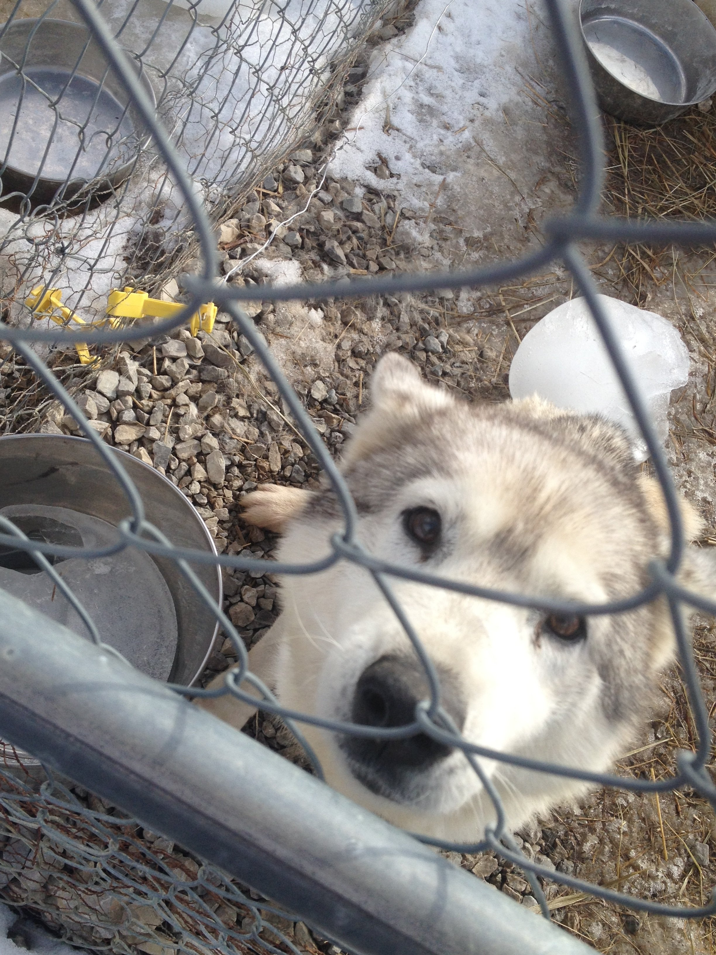 Records show Pope owns huskies, German shepherds, and some mixed breeds