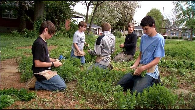 Bill Dohn employs middle and high school students to help him with the mint crop.