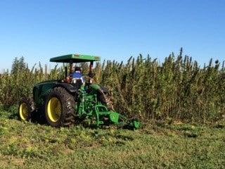 Hemp Harvest.jpg