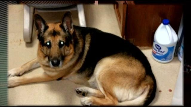 Bela the dog