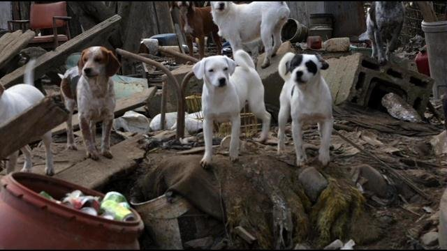 The animals were found Friday covered in feces and trash in Whitesville, Kentucky.