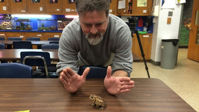 Plant operator Tom Plappert gets ready to feed one of the frogs at Whitney Young Elementary School (Photo by Toni Konz)