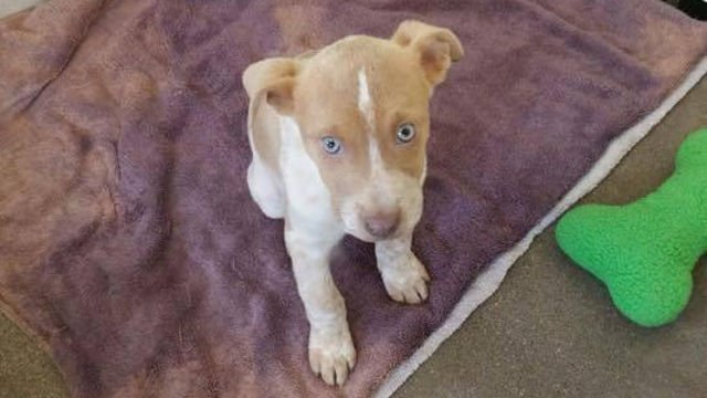 Thompson the puppy