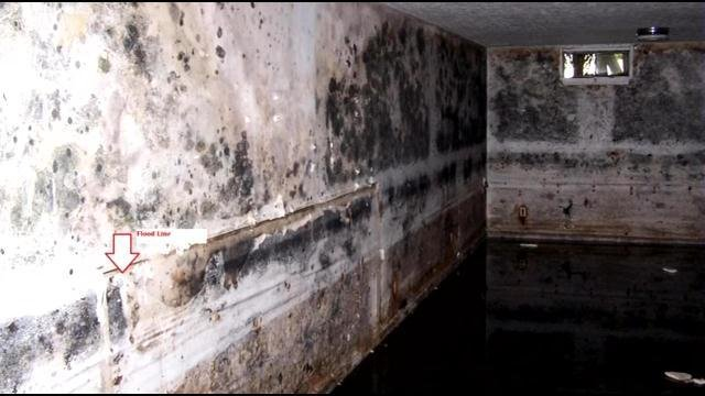 This is what can happen if walls that have had moisture in them aren't fixed by professionals.