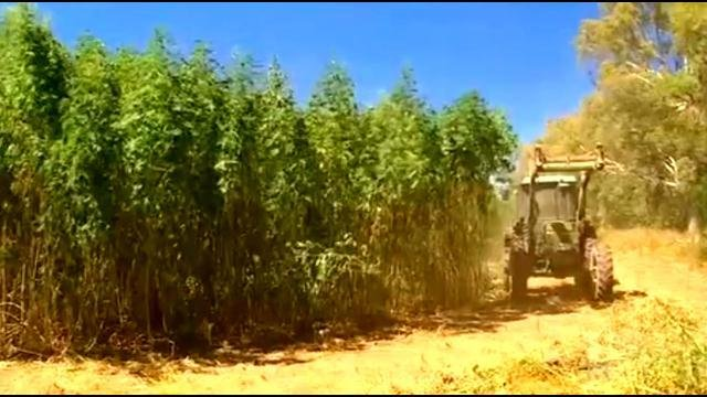 Sen. McConnell on hemp: 'Make this a legal crop'