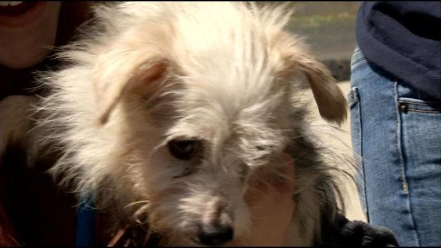 A dozen dogs rescued from horrific conditions in Tennessee are now in safe hands in Louisville.