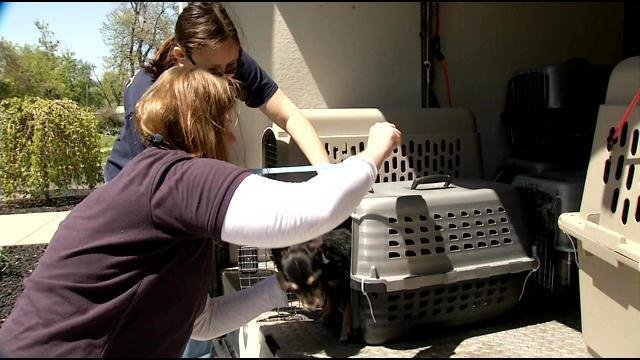 They're already looking healthier and happier with the Kentucky Humane Society as they arrived today.