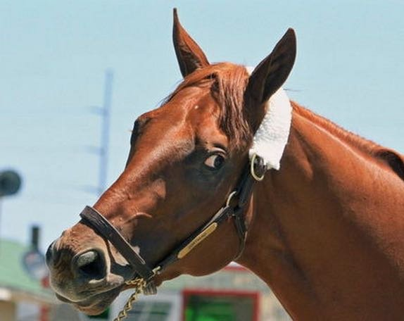 Dortmond is one of two talented Kentucky Derby horses in Bob Baffert's barn (Associated Press photo).