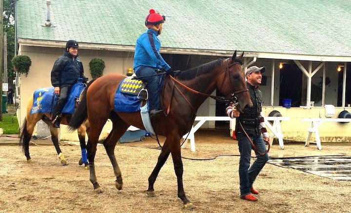 American Pharoah arrives back at the barn after his final pre-Belmont workout on Monday morning at Churchill Downs. (WDRB photo by Eric Crawford)
