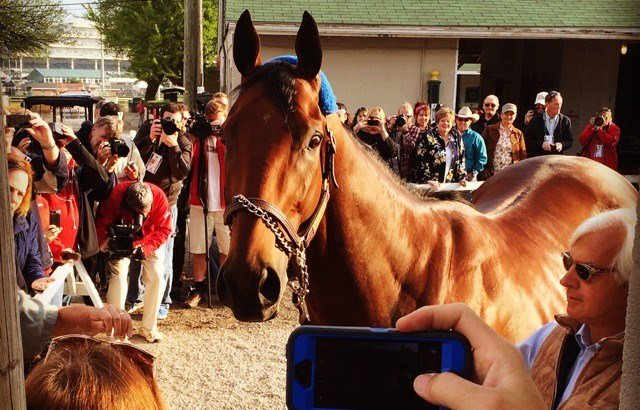 American Pharoah, shown here looking into a cell phone for a photo, appears ready for his Belmont close-up. (WDRB photo by Eric Crawford).