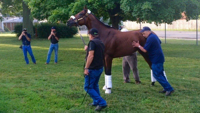 Triple Crown winner American Pharoah gets a nudge before boarding the van to leave Churchill Downs. (WDRB photo by Eric Crawford).