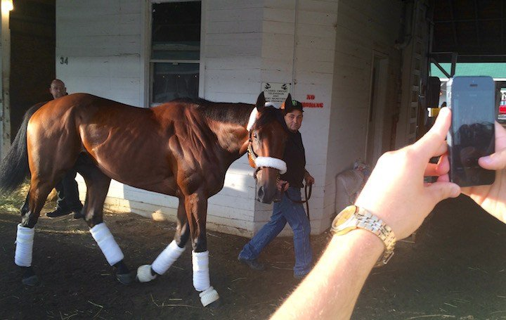 American Pharoah on his last walk around Bob Baffert's Churchill Downs barn before departing for California. (WDRB photo by Eric Crawford).