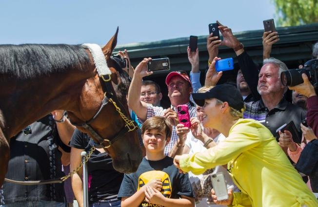 Fans greet American Pharoah at Santa Anita Park. AP photo.