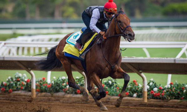 American Pharoah on the track at Del Mar Race Course in California. (AP image via Benoit Photo)