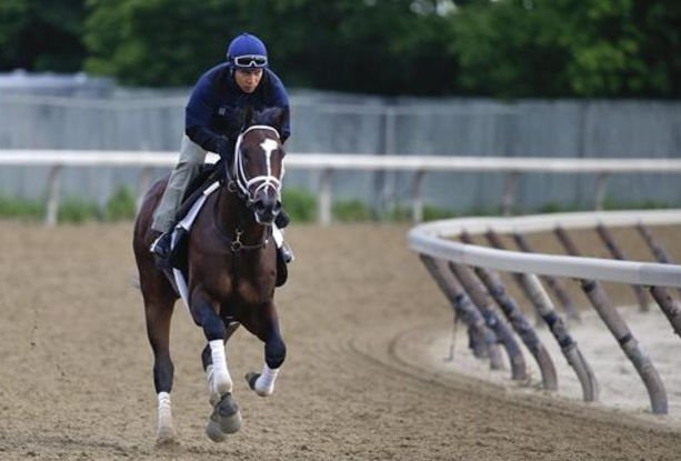 Todd Pletcher's Materiality galloped around the Belmont Park training track in preparation for the Belmont Stakes. He was retired on Saturday. (AP photo | Julie Jacobson)