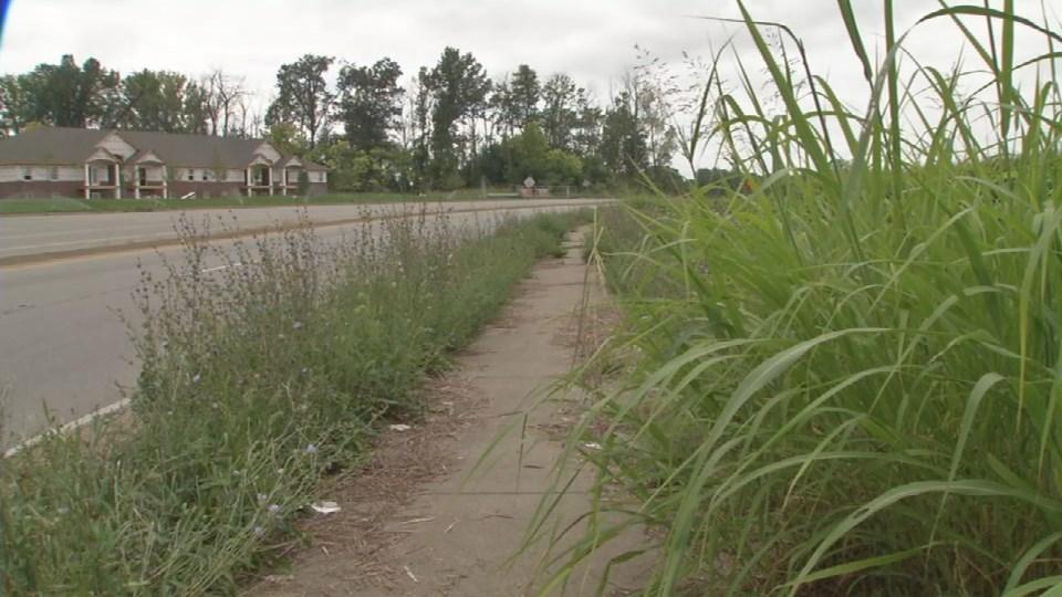 Some of the grass has overtaken sidewalks.