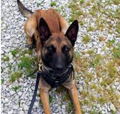 K-9 Riggs has helped an Indiana State Trooper arrest two drug suspects in less than a week.