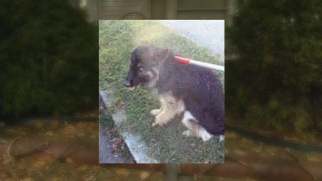 Charmail Washington was going to visit a neighbor when she found one dog, this German Shepherd named Zeko, lying in the yard and called Animal Control.
