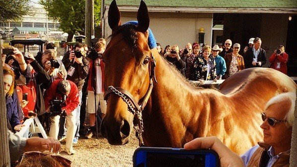 American Pharoah poses for fans the morning after he won the Kentucky Derby. (WDRB photo by Eric Crawford)