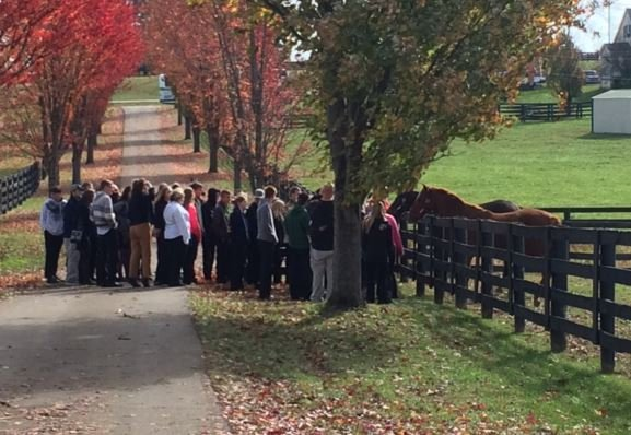 Visitors to Old Friends visit with Game On Dude and Star Spangled Heat (Photo by Toni Konz, WDRB News)