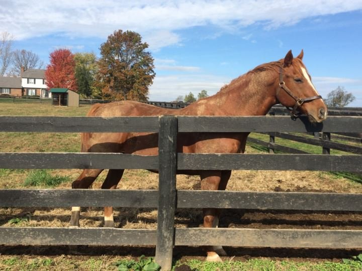 Genuine Reward poses at Old Friends Farm in Georgetown, Ky. (Photo by Toni Konz, WDRB News)
