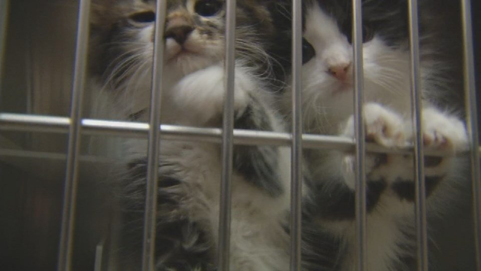 Kittens wait to be adopted from the New Albany-Floyd County Animal Shelter