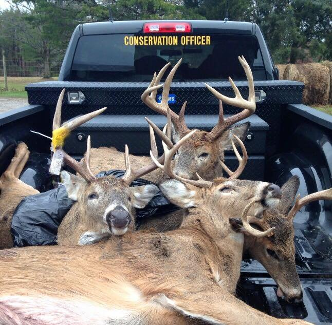 Deer seized by Indiana Conservation officers.