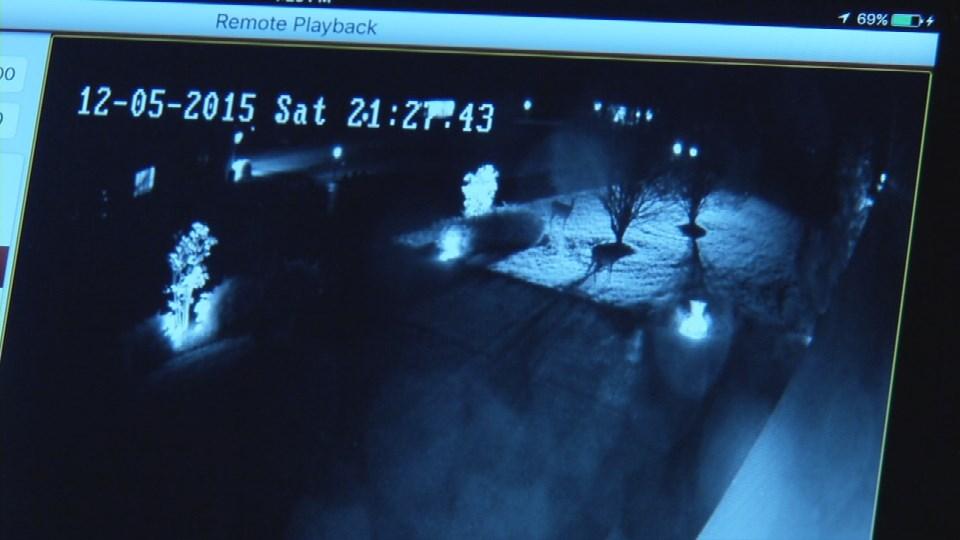 Surveillance video showing deer