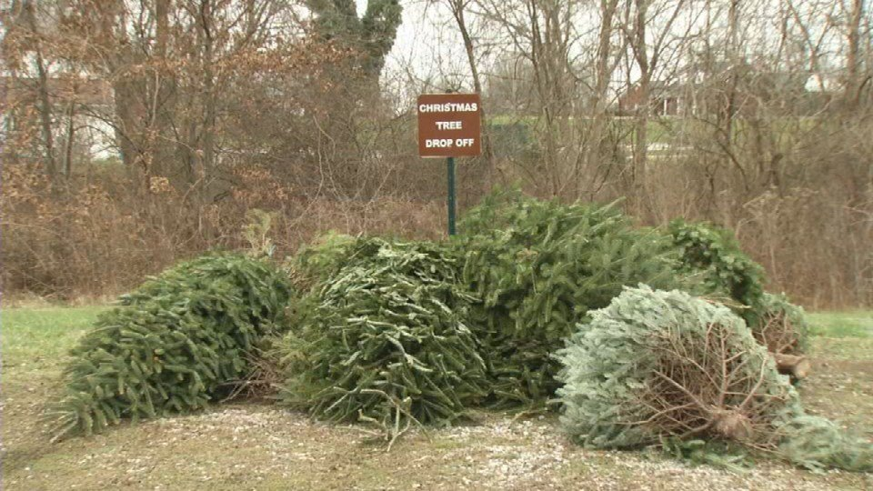 If you're considering dropping off your tree, officials just ask that you take off the lights and ornaments before dropping it off.