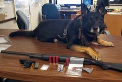 """""""Teague"""" the drug dog poses with evidence seized during a traffic stop on Jan. 31, 2016. (Source: Indiana State Police)"""
