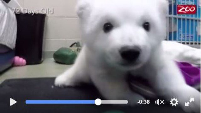 A screenshot of the Columbus Zoo's video on Facebook.