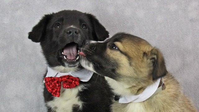 Photos courtesy: Kentucky Humane Society