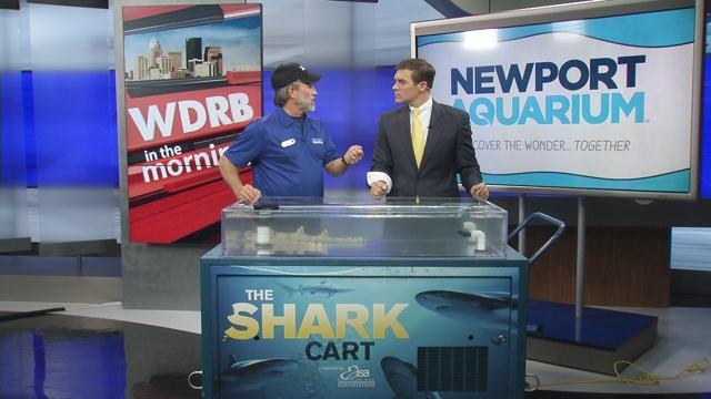 Shark cart