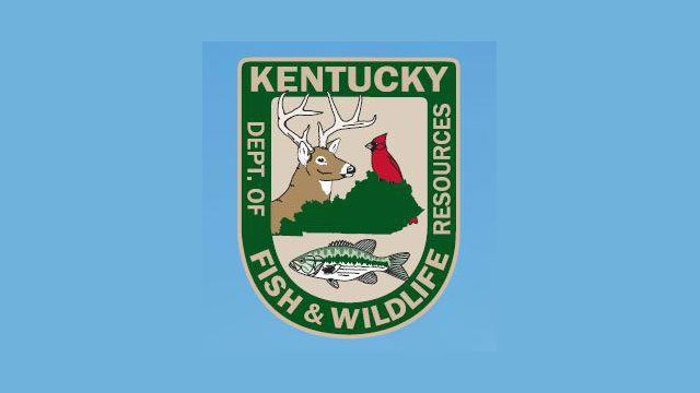 Ky department of fish and wildlife there are no bull for Ky fish and wildlife