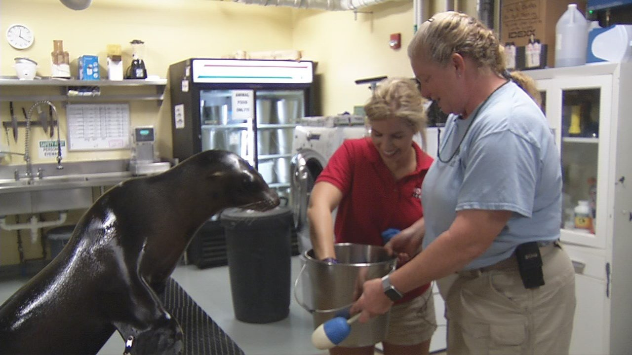 GINA ON THE JOB: Louisville Zookeeper - WDRB 41 Louisville ...