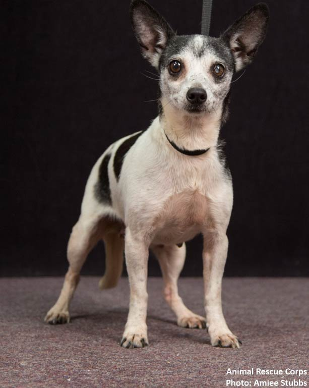 Small Dogs For Adoption In Louisville Ky